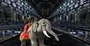 Lost Baby Elephant