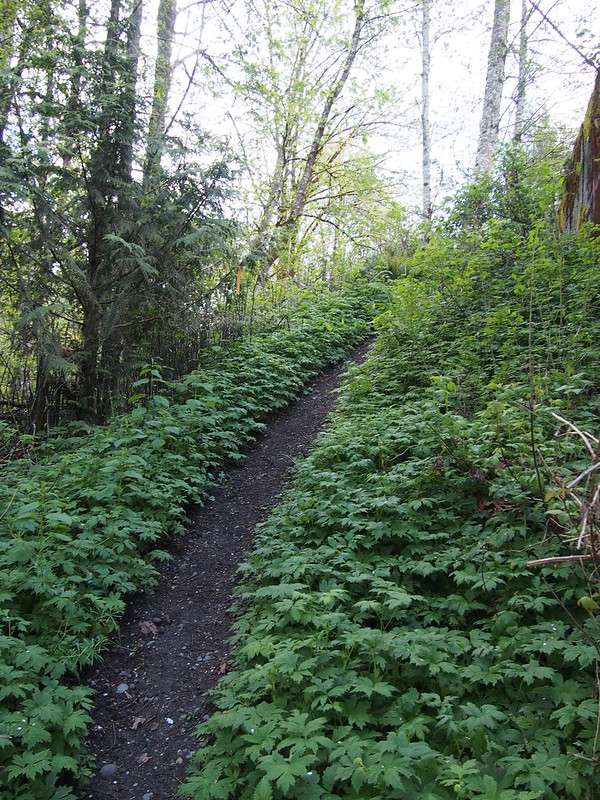 Path to Foothills Trail: A rather steep climb when pushing a bike