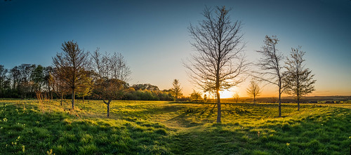 panorama tree nature landscape countryside flickr pano olympus hampshire omd basingstoke lightroom 2015 m43 mft lr6 em5 kempshott microfourthirds 918mm mzuiko em5markii em5mark2 em5mk2