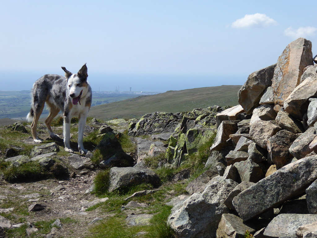 On Middle Fell
