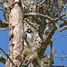 Laurel Parshall has added a photo to the pool:Oakbrook Golf Course, Lakewood, WA.  eBird checklist S22532598