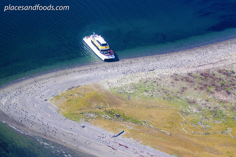 Martillo Island penguin island Ushuaia cruise