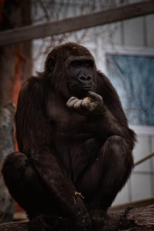 Name: zoo-053-20150327
