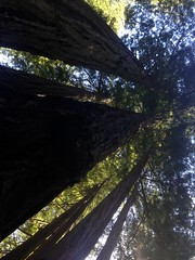 At the Feet of Giants
