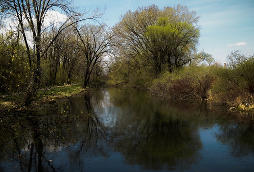 park trees nature water minnesota creek reflections landscape spring midwest scenery stream winona