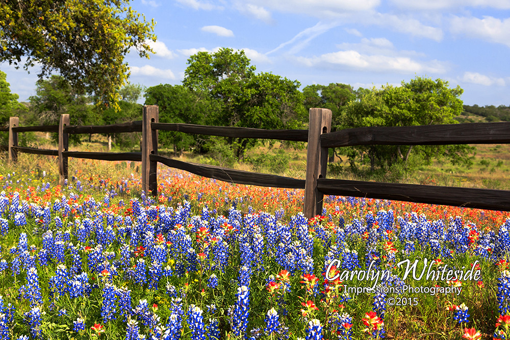 Hill Country Photography Club – Helping Texas Hill Country ...