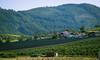 Slovenian landscape 6