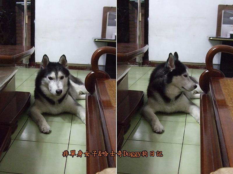 Doggy歡迎光臨16