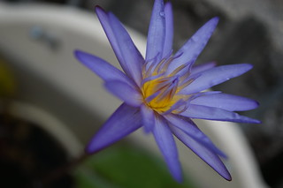 Photo:DSC05552 By:舞桜