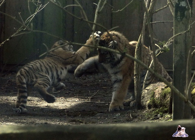 Zoo Eberswalde 22.03.2015   187