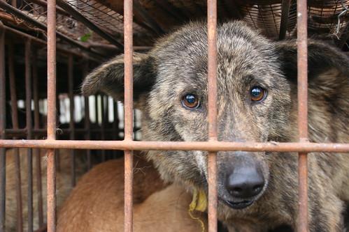 The sad caged dog at a China's dog market, 2008