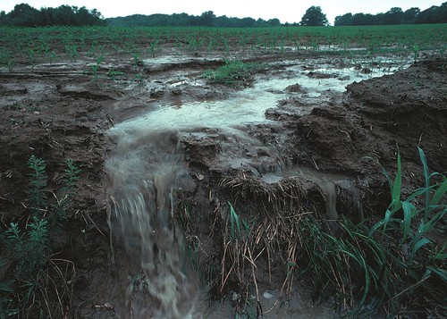 Betts, L. (2011). Iowa Field Erosion (pp. Topsoil as well as farm fertilizers and other potential pollutants run off unprotected farm fields when heavy rains occur.). Iowa: NRCS.