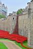 London Poppies At The Tower Of London 20-9-2014 by Martin Pettitt