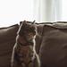 Sofa Cat by Fieldy.