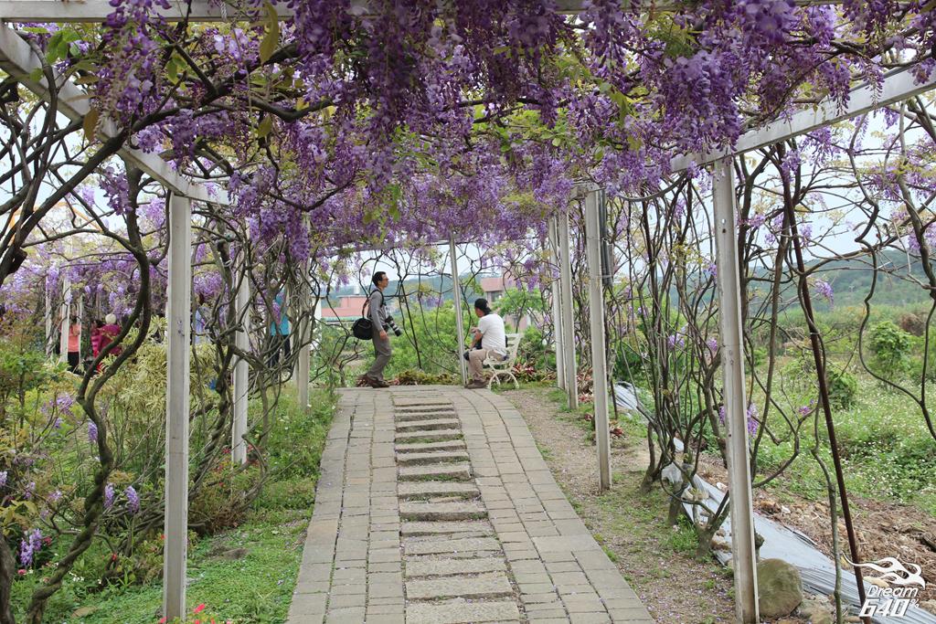 淡水紫藤咖啡園25