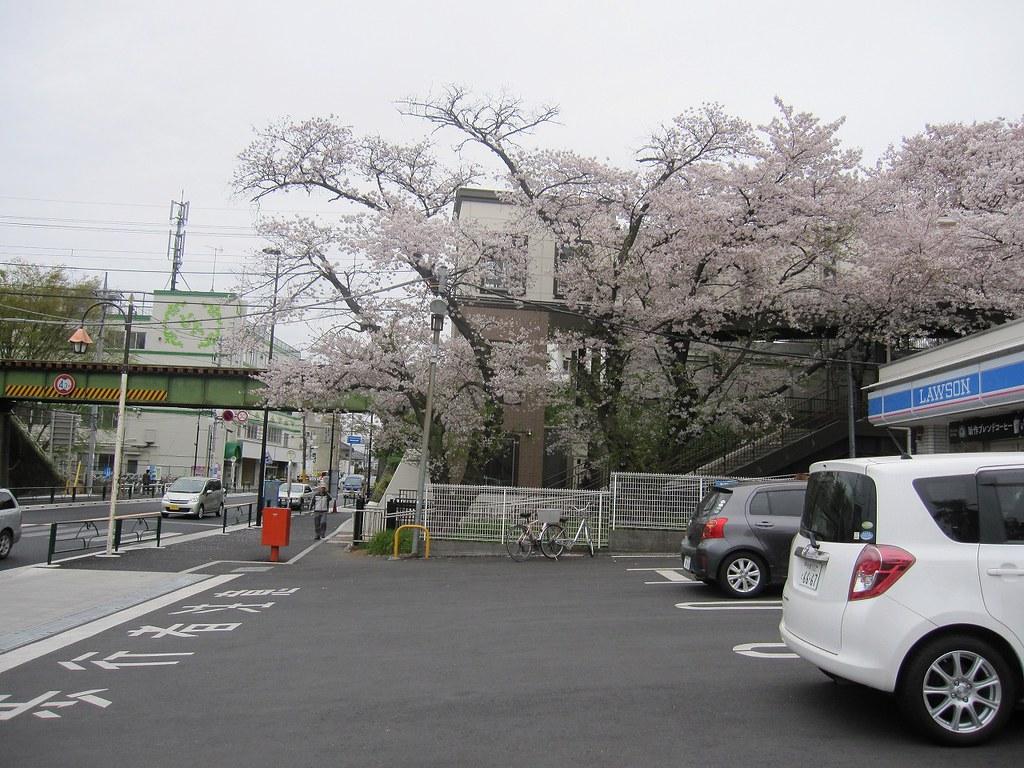 20150404_お花見LR (1)