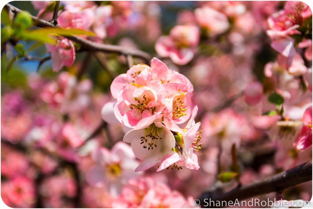 2015-04-06-20150406(Canon EOS 6D)-00068