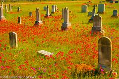 New Berlin Cemetery Wildflowers -- 2015 #3