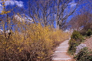 Minimal Signs of Spring, Arnold Aboretum, April 19, 2015