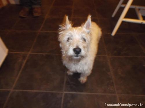 [Updated] Wed, Apr 22nd, 2015 Found Female Dog - R339, Monivea, Galway