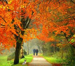 Colours of Autumn. The Canal walk, Kilkenny city, Ireland.