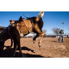 The Pleasure  of Riding Horses