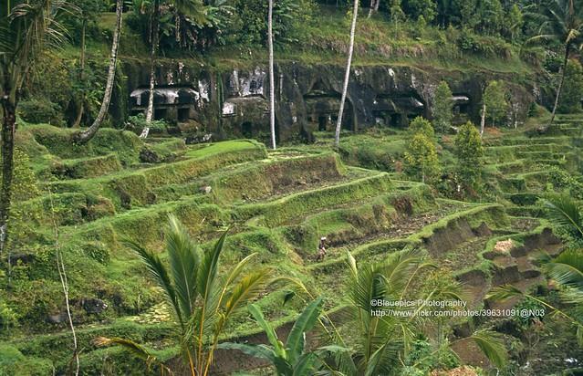 Bali, Gunung Kawi Sebatu, rice fields