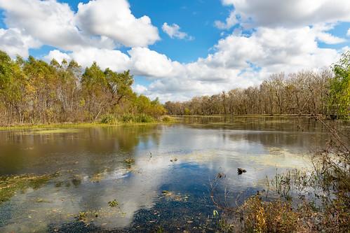 brazosbendstatepark elmlake texas needville bayou pond nikon d800e gator turtles summer