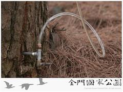 松材線蟲生物防治-02