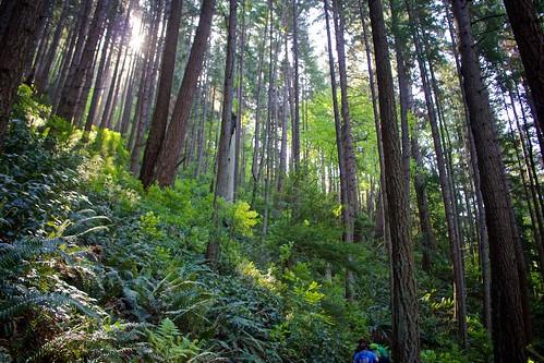 trees usa sunshine forest washington northwest hiking trail