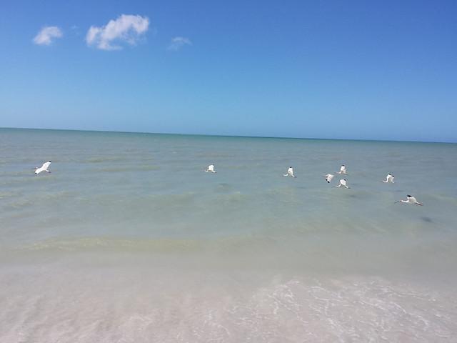 ibises_1
