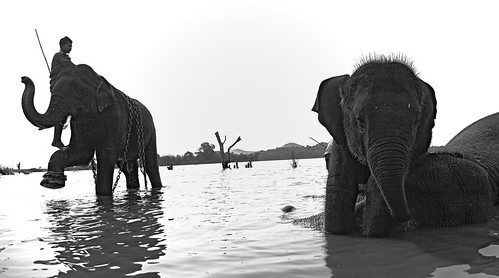 The Elephants of Sakrebailu