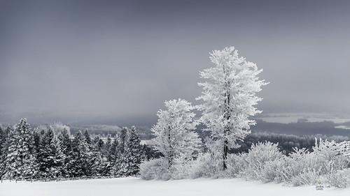 Encore la neige