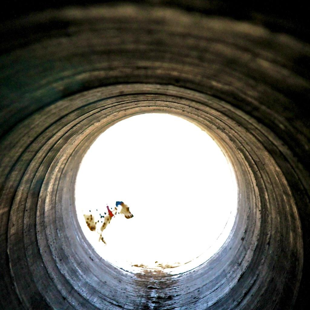 Vista de bala ::Bullet view :: Vue bullet ::: 20120122 2538