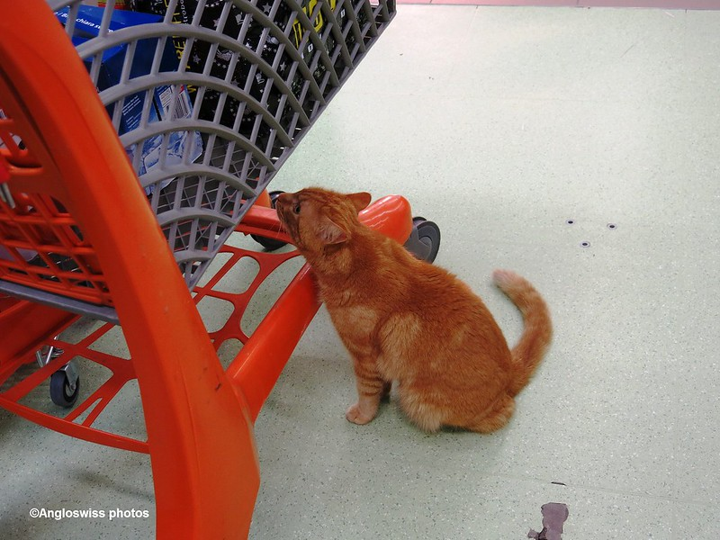 The Supermarket Cat