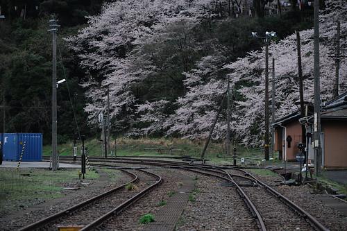 廃線にも桜を添えて