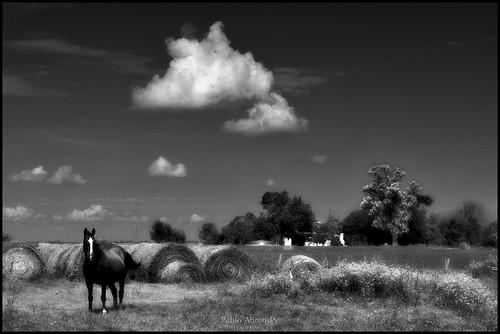 Autor: Pablo Abrudsky