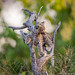 Leopard Cub Playing by Will Burrard-Lucas | Wildlife