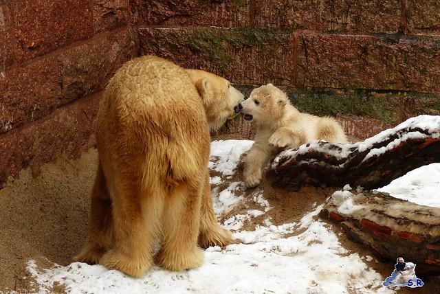 Eisbär Taufe Fiete Zoo Rostock 31.03.21015 68
