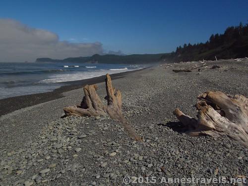 Driftwood on Ruby Beach, Olympic National Park, Washington