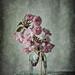 Esas flores rosas by saparmo