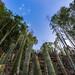 Bye Bye, Bamboo