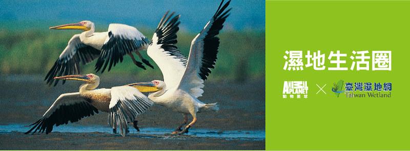 台灣濕地網x動物星球頻道 國際濕地故事與《濕地生活圈》節目帶你橫跨四大洲五個國度,走進美麗濕地!