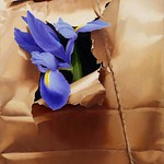 Sarah van der Helm; Iris in Brown Paper Sack; Oil on canvas; 24x18; 2013 -
