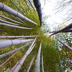 Bamboo Up - #cincinnatizoo #zoo #cincygram #cincypics #cincinnati #uptown #nature
