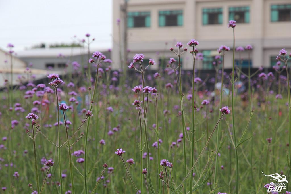淡水紫藤咖啡園28