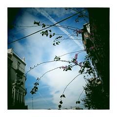 Error en banner. Pero lo mola todoytodo. #valensiaaaa #printemps #urbanart #fleuri .