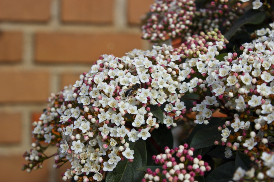 lara-vazquez-mad-lula-style-flowerpower-spring-life