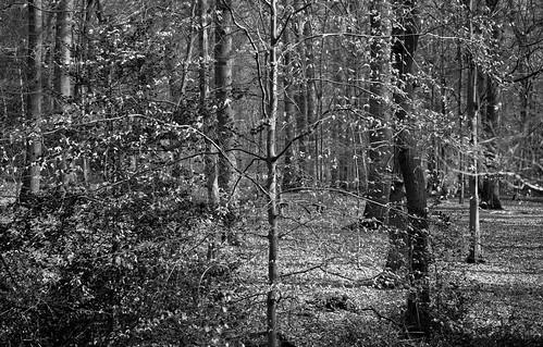 wood trees tree leaves canon mono woods 5d wgc 85mmf18 sherrards gor44