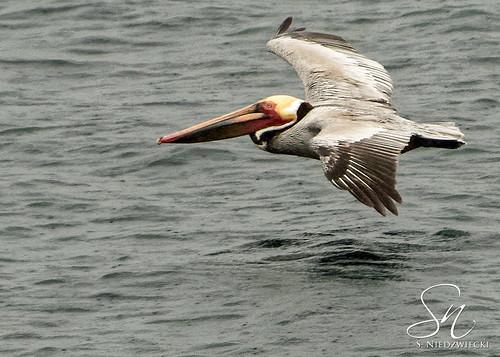 Pelican 0849-15